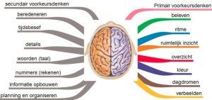 Lessons4You - Hersenhelften van een beelddenker