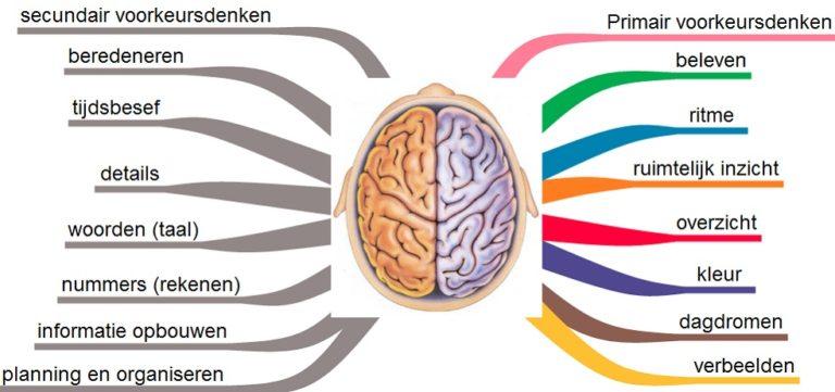 Lessons 4 You - Hersenhelften van een beelddenker